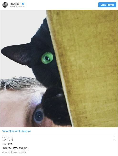 Photo of a cat which Lee Ingleby gifted to his girlfriend