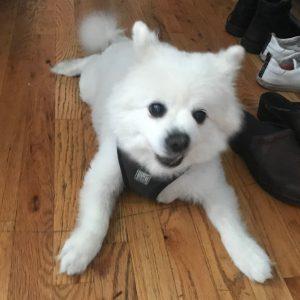 Ben's dog, Puffin
