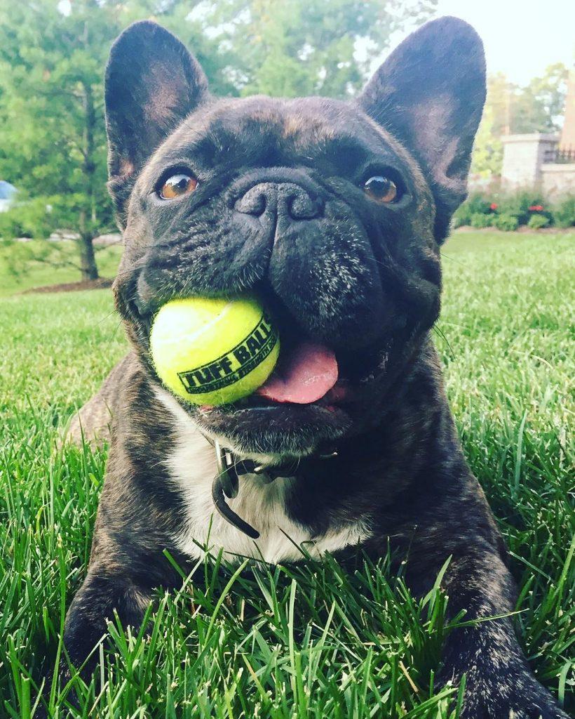 Melissa's Dog, Tater