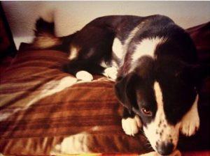 Colleen Wolfe's Pet dog Blitzen
