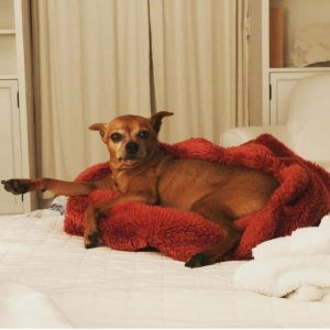 The picture of Lori's dog named Louise Goldstein